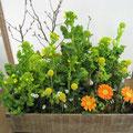 2月6日 菜の花箱庭風