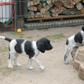 Biko und Buddy