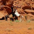 Die Pferde freuen sich auf den Auslauf