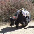 Yak Transport