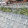 屋根に草がはえてしまっています。