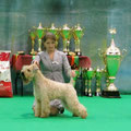 """""""Nevsky Winner 2013""""CACIB, BOB в Бэсте 3 группы"""