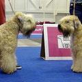 Euro Dog Show 2013, Ascold & Altair