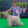 """Nevsky Winner 2013""CACIB, BOB"