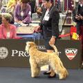 Wold Dog Show 2012  -Чемпионат Мира (4 место)