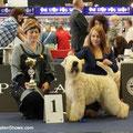 Wold Dog Show 2012 Salzburg 18.05.12 - Юный Чемпион Мира!!!