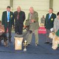 30.09.2012 CACA-Terrier-Show Tulln V1, CACA, BOB, Klubsieger Royal Canin Double Winner 2012