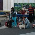 8 мес. Выставка 22.10.11 Лучший щенок выставки !