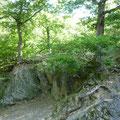 auf dem Urwaldsteig