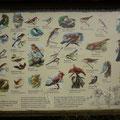 Tafel der Vogelarten