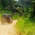 wir fahren durch schönes Dschungel Gebiet