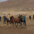 das schnellste Pferd ohne Reiter!!:-)