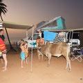 Seppli die kuh kommt jeden Aben auf Besuch und erhält Futter von den Overlander, angefangen hat diese Storie mit Roy!:-)