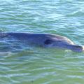 Dieser Delphin heisst auch Nicky und hat am gleichen Tag Geburri, sowie selber Jahrgang.
