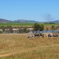 unsere erste Safari in Stellenbosch