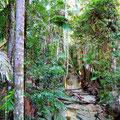 Dschungel im Zentrum der Insel