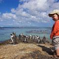 bei den Pinguinen am Boulders Beach
