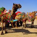 Kamel Riding