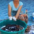 Pavinee am Waschen