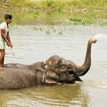 Elefanten...
