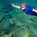 Nicky schwebt über den Korallen