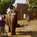 irgendwo auf dem Weg Richtung Pondicherry läuft dieser Elefant am Strassenrand mit seinem Pilger