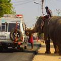 der Elefant bettelt nach Geld..:-)
