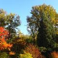 Herfst in het liesbos
