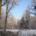 Winter in het Liesbos