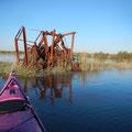 Insolite rencontre à proximité du domaine de Certes, accessible lors d'une grande marée ©FredG
