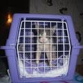 Verwahrloste und schwerst verletzte Hoarderkatze -  Oskar