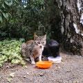 Streunerle Tiffy und Susi - August 012