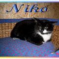 Wildling - Niko