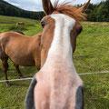 Ich glaub, mich knutscht ein Pferd - Thüringen, Deutschland