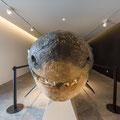 Ponta Delgada - Naturkundemuseum