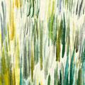 葦の芽吹き