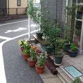 緑のゴーヤカーテンやプランター栽培