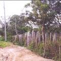 Frontseite des Grundstücks von rechts