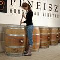 Pfneiszl / Sopron