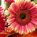 Suzie Day Flower - 1