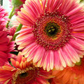 Suzie Day Flower - 2