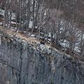 Orso bruno marsicano (Ursus arctos marsicanus)