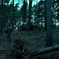 Hermione Granger (Emma Watson) et Harry Potter (Daniel Radcliffe) courant dans une forêt