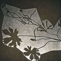 ranunculus constans/Schattenwirkung