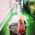 西武渋谷店の裏側で台車に揺られる魚肉さん。