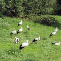 Der Vogelpark Marlow lohnt einen Ausflug ins Binnenland