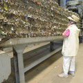 In der Abfallverwertungsanlage (Foto: D. Hartz)