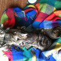 Unsere 4 Hauskatzen am Rhyner Hof