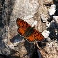 und schöne Schmetterlinge
