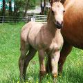 2 Wochen alt